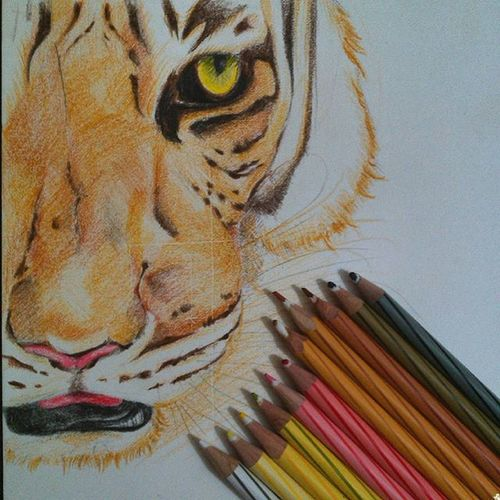 Tiger Sketch Staedtlers Colour Fierce Love Fear Ruthless and finally, thanks to @vishwatejrpawar for that amazing click! :D