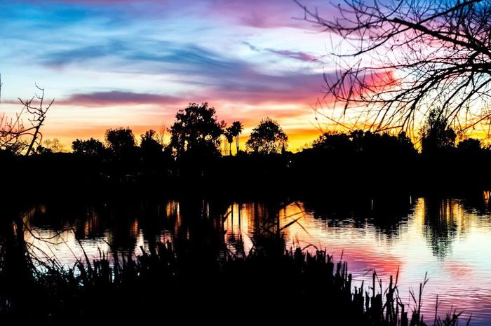 My camera is my paintbrush Landscape Photography Photography Sunset Silhouette Tree Reflection Beauty In Nature Water Tranquil Scene Landscape Cloud - Sky Lake Nature Sky Tranquility