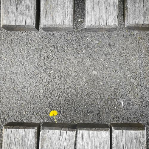 he made it. 😊🌻 Asphalt Jungle No People Day Outdoors Architecture Dandelion Growth Yellow Huaweiphotography High Angle View Flower Outofnowhere Asphalt Intheheartofthecity HuaweiP9 EyeEmNewHere Close-up Sunny Resist Art Is Everywhere EyeEm Diversity The Secret Spaces Paint The Town Yellow