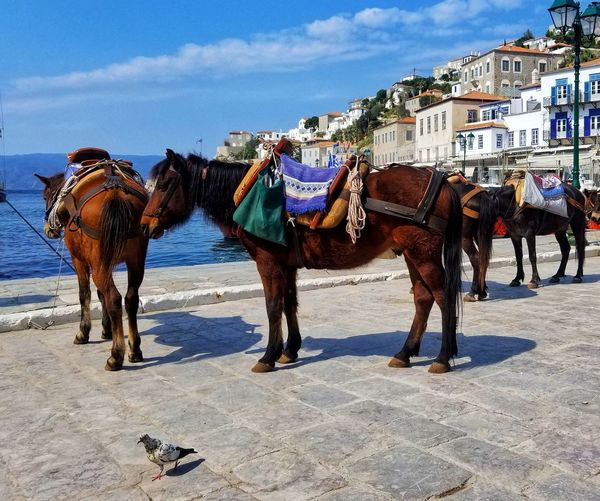 Horses standing in a horse