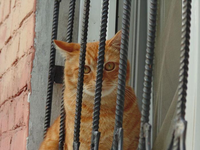 Portrait of cat behind metal bars