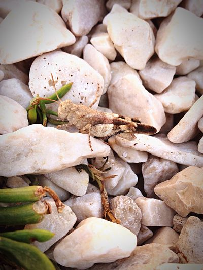 Beach Insect Holiday