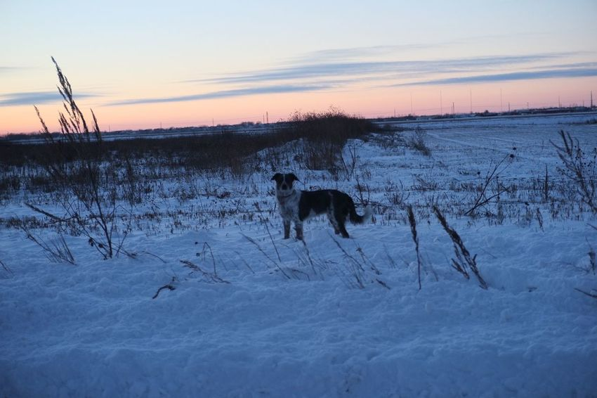 Animal Themes Beauty In Nature Cold Temperature Day Field Mammal Nature No People Outdoors Scenics Sky Snow South Fargo Tranquil Scene Tranquility Tree Weather Winter Winter