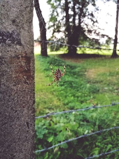 Animal Photography Insect Spider Nature Animals In The Wild Outdoors Beauty In Nature Amazing Beauty Day Tree Animal Themes Growth Green Color One Animal No People Plant Grass Close-up Flower Fragility Sky