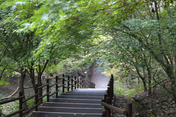 autumn in Maisan Mountain, Muan, Jeonbuk, South Korea Autumn Beauty In Nature Branch Curve Day Fall Forest Landscape Maisan Nature No People Outdoors Stairway Tranquility Tree Walkway