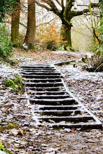 Steps in winter. Stalybridge Gorse Hall Winter Steps Walking Around Tree Outdoors Day Nature No People Tranquility Growth Beauty In Nature