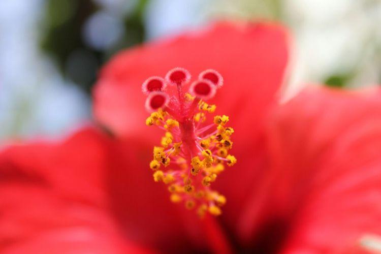 A flower's closeup - Shoot, Share, Learn- EyeEm Beirut Meetup Nature Colors Beautiful