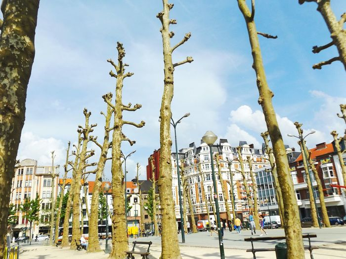 Sun is shining. Outdoors Nature Tranquil Scene Tree Sky Architecture Day City Life Exterior Architecture Relaxing Walking Around Walking Around The City  Scenics Bruxellesmabelle EyeEm Best Shots The Great Outdoors - 2016 EyeEm Awards The Great Outdoors With Adobe