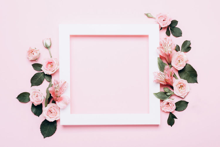 Directly above shot of pink roses against white background