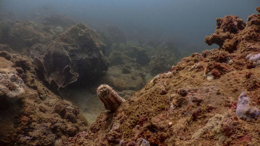 Sea cucumber at mariveles