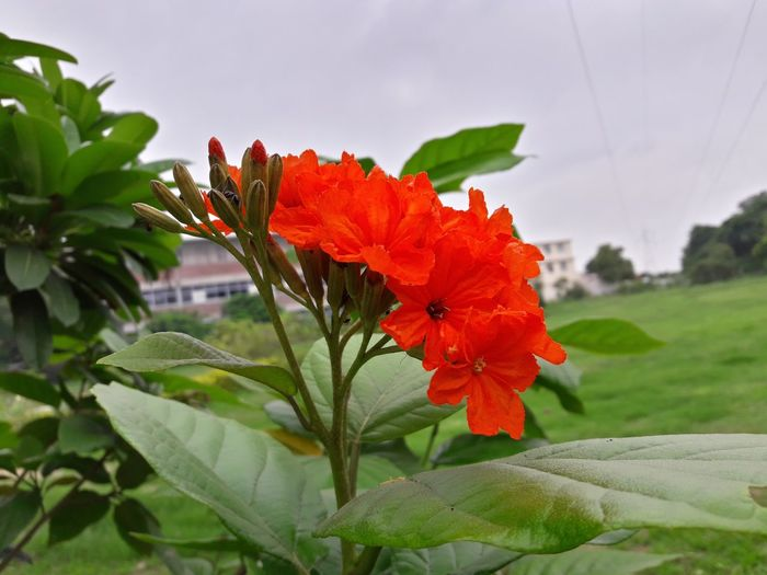 Monsoon Coming.. flower