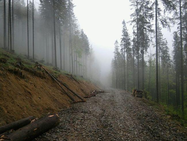 polska Forest Fog Nature Beskidy Polska Poland Las Trees Śląsk Wood Beskid Zywiecki Nature