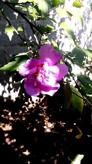 La naturaleza nos regala miles de ellas las flores más hermosas ✨ Flower Branch Tree Petal Leaf Close-up Plant Blooming Iris - Plant Purple