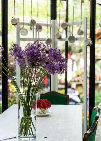 Purple allium flowers in vase on table