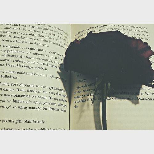 Kitap arasında gül kurutmak da sevdaya dahil. ? Rosé Book Love