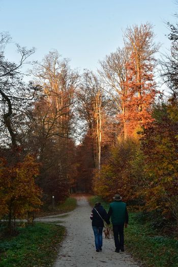 Evening Light Orange Color Autumn colors Sonian Forest Tree Plant Real People Sky Nature Walking Rear View Growth Women Day Two People Lifestyles Men Adult Outdoors People Beauty In Nature Togetherness Leisure Activity The Way Forward