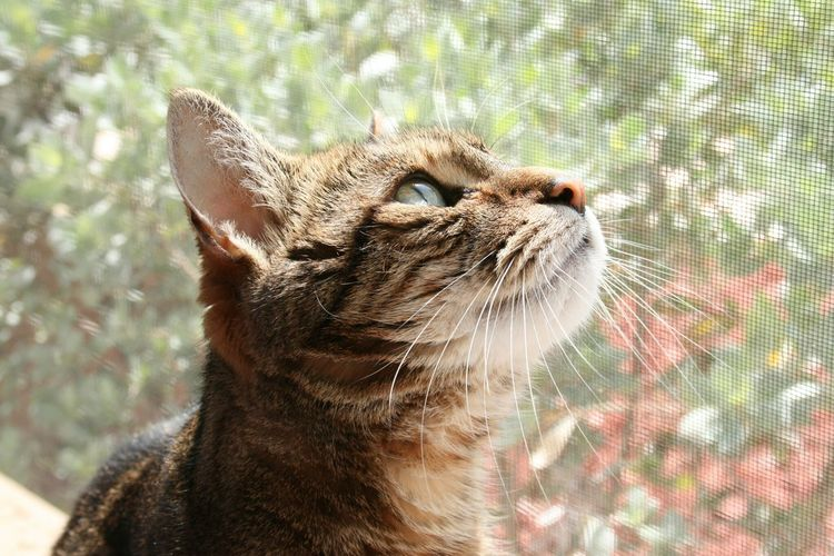 Close-Up Of Cat Looking Up By Glass Window