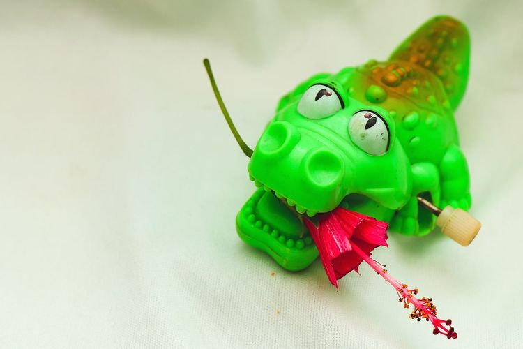 Flower Alligator Studio Shot Happiness Christmas Christmas Decoration Close-up Green Color Toy Animal Christmas Ornament Toy Doll Puppet