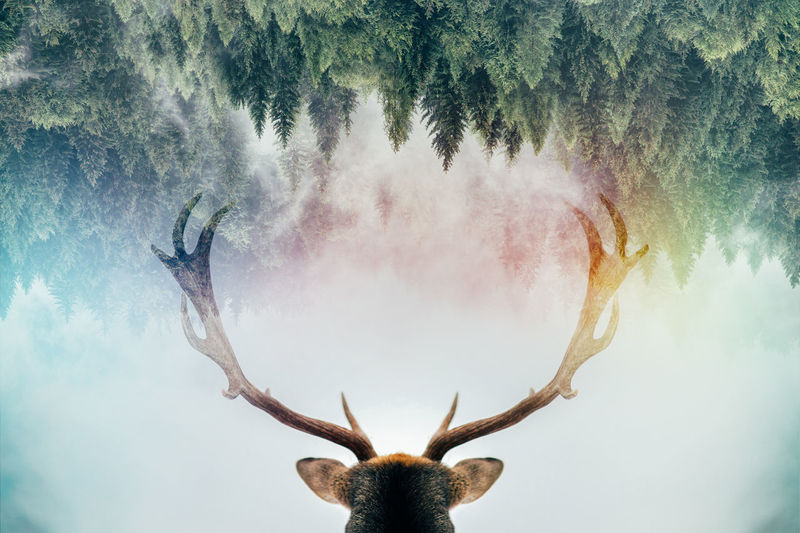 Nature Tree Sky Plant Day Outdoors Digital Composite Animal Body Part Art And Craft Headshot Creativity Low Angle View Front View Real People Close-up Horned Animal Wildlife Arms Raised EyeEmNewHere