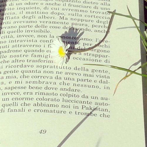 Book StoriadiIqbal Flower Sun atthepark