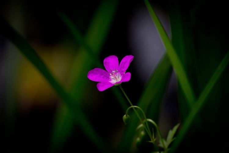 Nature Flowers Pink Green Hello World Taking Photos Harmony Freedom Natural