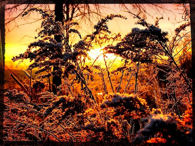 Nature Beauty In Nature Sunrise Cold Day Golden Hour