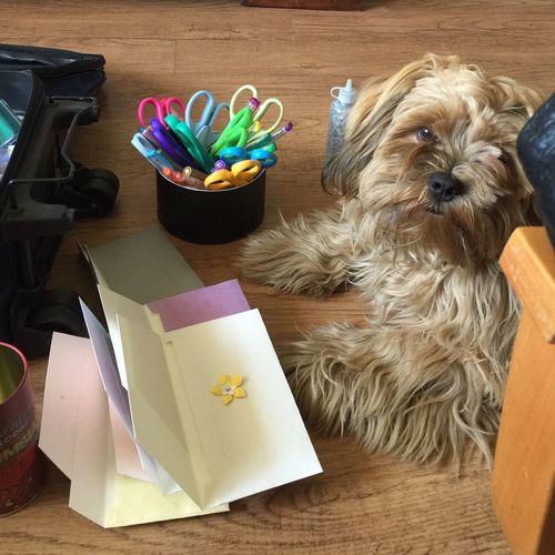 Cachorro trabajando
