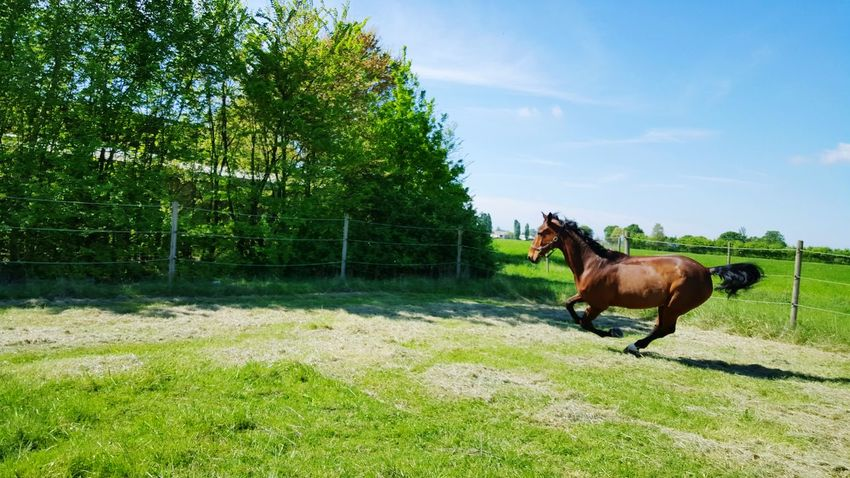 Springtime Horse MyHorse Beautiful Day Beauty In Nature Hanging Out Relaxing Running Free