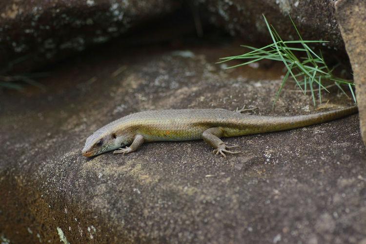 View Of Lizard
