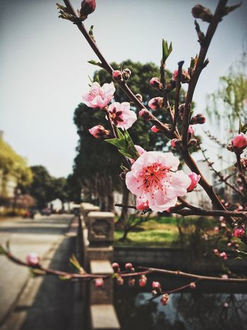 Flowers Hello World Check This Out Enjoying Life Hanging Out Soochow University Yummy♡