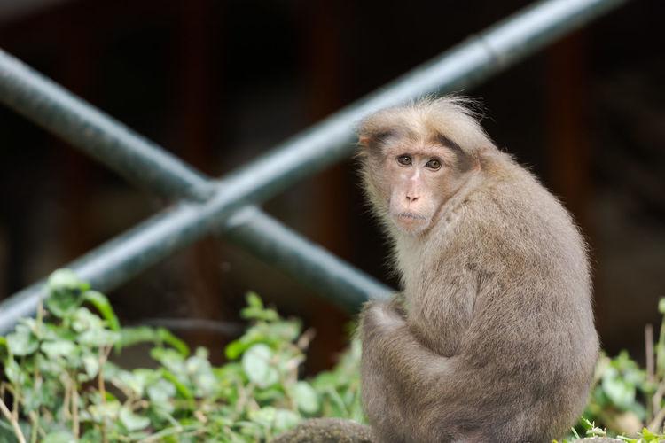 Portrait of monkey sitting