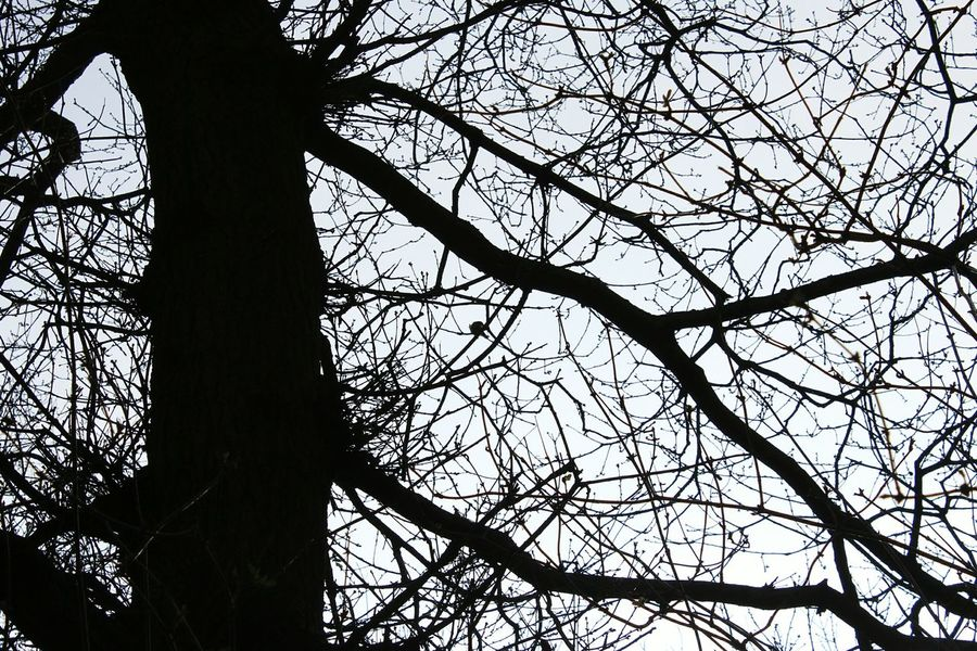Silhouette Nature Trees Natural Pattern Normanby Hall Scunthorpe