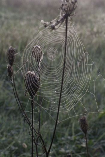 Dew Fall Morning Beauty In Nature Close-up Day Dull But Beautiful Focus On Foreground Fragility Growth Nature No People Outdoors Plant Spider Web EyeEmNewHere