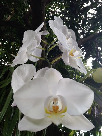 Orchid flowers Beauty In Nature DELTA API Rumahalir Lombok Island NTB No People Nature White