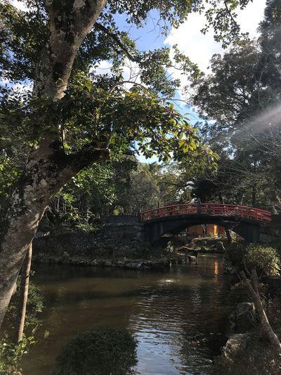 Japanese bridge Shirane Japan Garden Water Tree Plant Nature No People Architecture Outdoors Lake Flowing