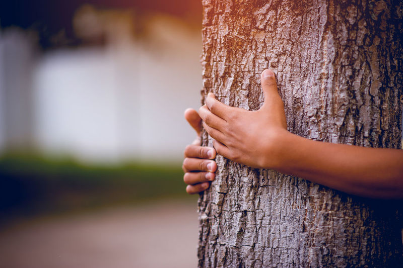 Close-up of hands embracing tree trunk in park