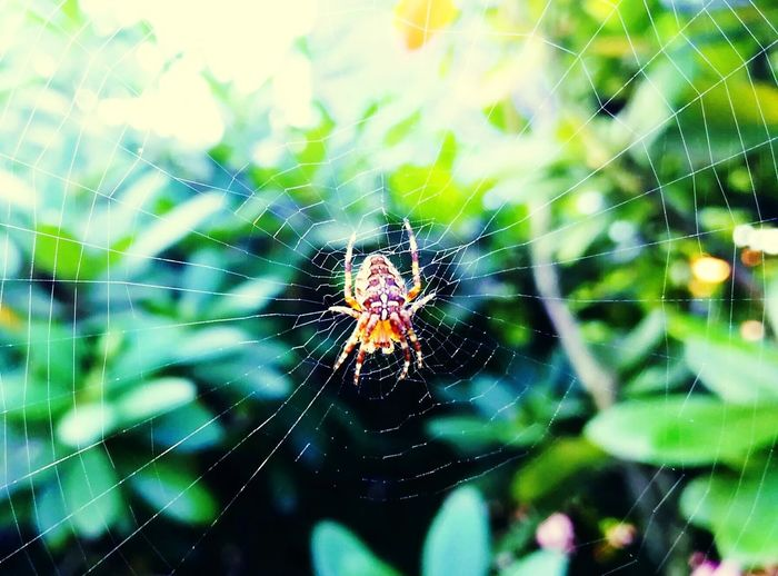 Spider Web Spider Nature One Animal Web Focus On Foreground Fragility Close-up Animals In The Wild Complexity Survival Animal Themes No People Intricacy Outdoors Animal Wildlife Day Animal Leg Beauty In Nature The Week On EyeEm