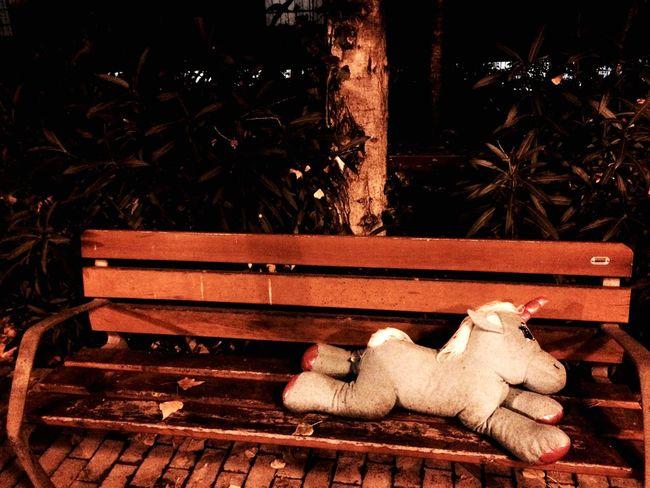 Animal Themes One Animal Unicorn Abandoned Toy Broken Heart Dream
