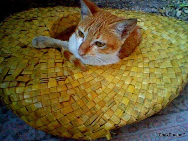 trip ko lang magsumbrero ng pabaligtad. Feeling Model Cats 🐱 Gata ♡