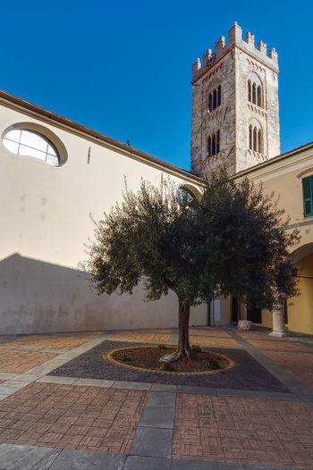 San Martino square Architecture Bell Tower Building Exterior Built Structure Church City Clear Sky Foreshortening History Middle Ages No People Olive Tree Outdoors Religious Architecture San Martino Square Toirano Tower Tree Tree Triple Lancet Window Urban Urban Landscape Urbanphotography
