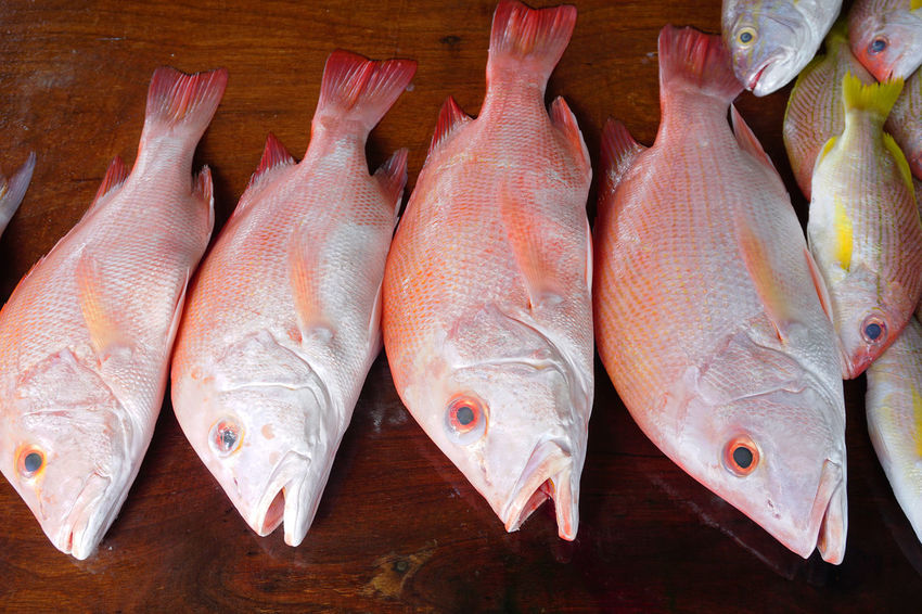 Snapper Fish #closeupshot #market #snapper Close-up Day Fish Food Food And Drink Freshness Healthy Eating High Angle View Indoors  No People Raw Food Red Grouper And Snappe Seafood EyeEm Selects EyeEmNewHere