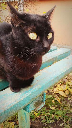 Backgrounds Portrait Holiday Day Tree Nature Cat Cats 🐱 Animal Themes Animalsaddict Pets Eyes Cat's Eyes