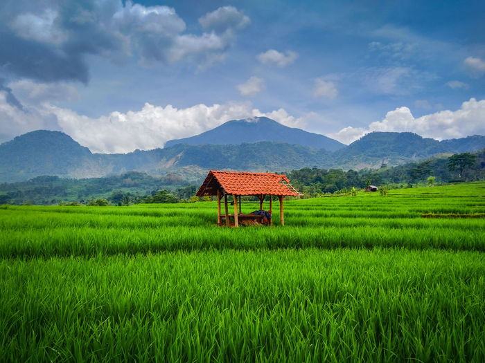 Daylight green rice fields and mountains