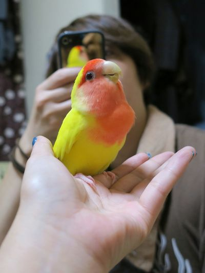 Cropped Hand Of Woman Holding Lovebird While Friend Photographing At Home