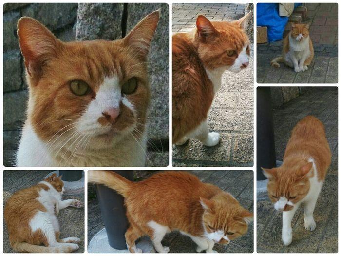 昨日会った野良猫さん。 Cat Stray Cat Catsnap Street Photography