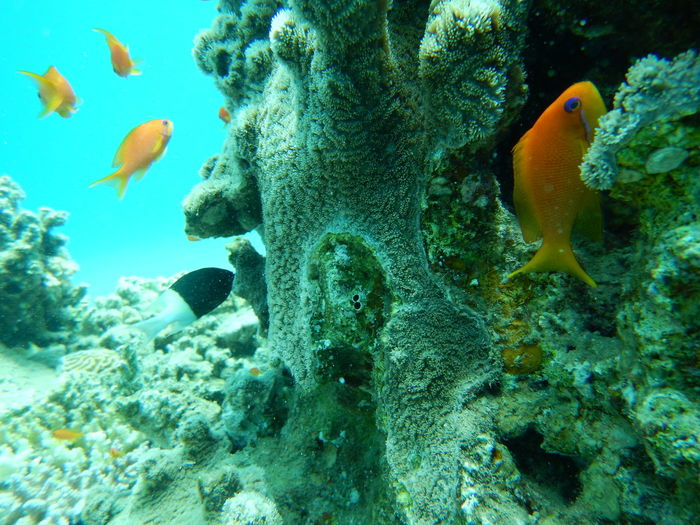 Underwater Photography Sea Life UnderSea Fish No People Animal Themes Coral Reef Colorful