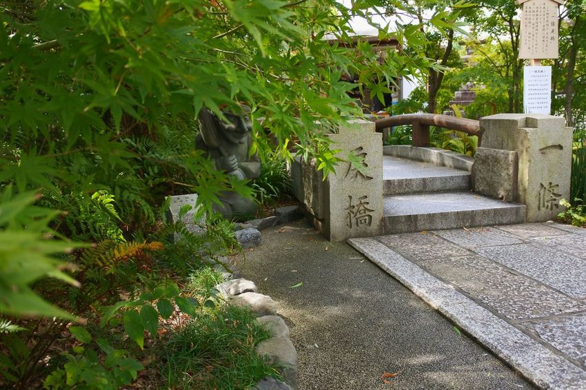 Green Color Growth Plant Formal Garden 日本 京都 Kyoto, Japan 晴明神社