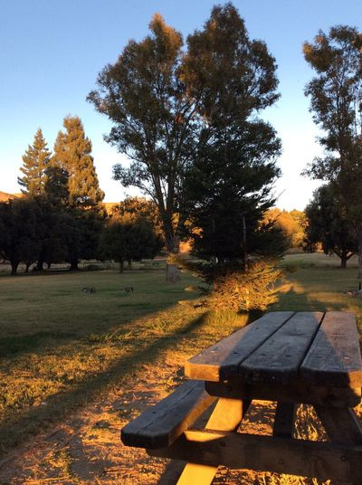 Tree Nature Bench Park - Man Made Space No People Autumn Beauty In Nature Sky Tranquility Outdoors Tranquil Scene Growth Scenics Day