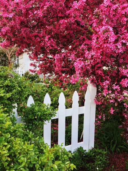 Spring Garden (© Sean Arbabi | Arbabi Imagery)