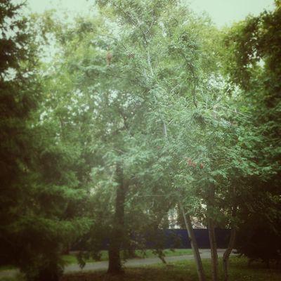 осень Природа Omsk Nature